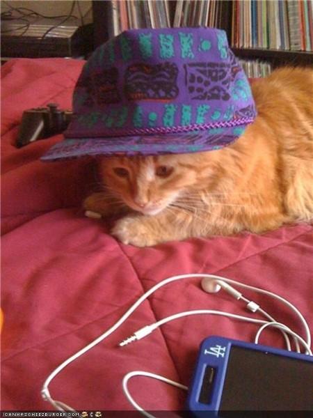 Best Coast lança concurso de legendas para a foto do gatinho de Bethany Cosentino.