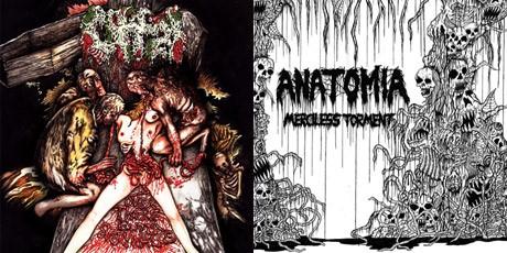 anatomia-offal-split
