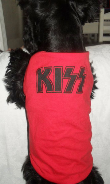 Rock pra Cachorro