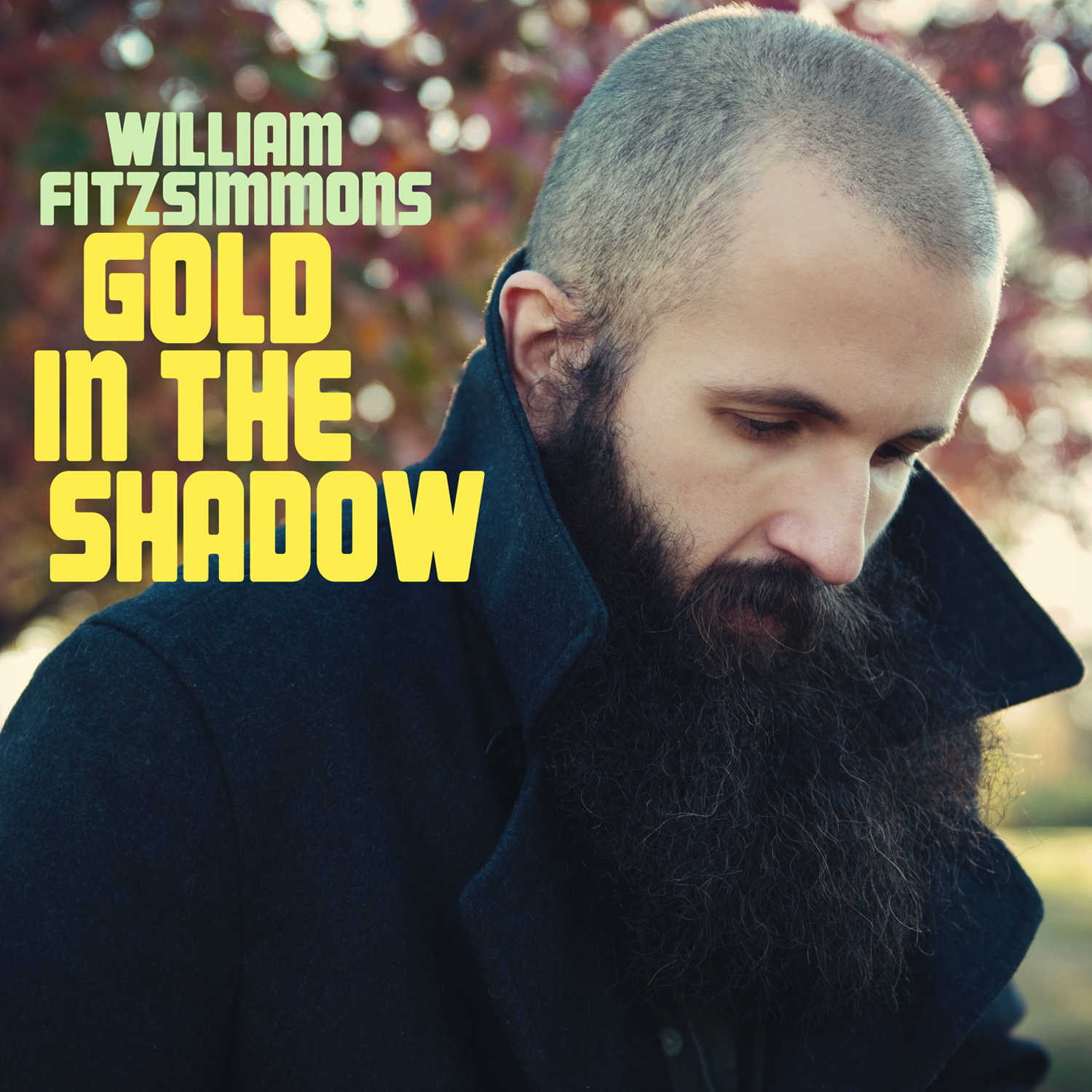 William Fitzsimmons Gold In The Shadow