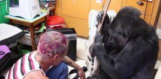 Flea toca baixo com Koko, a gorila