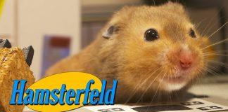 Hamsterfeld: hamsters em Seinfeld