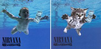 gatos nevermind nirvana capa