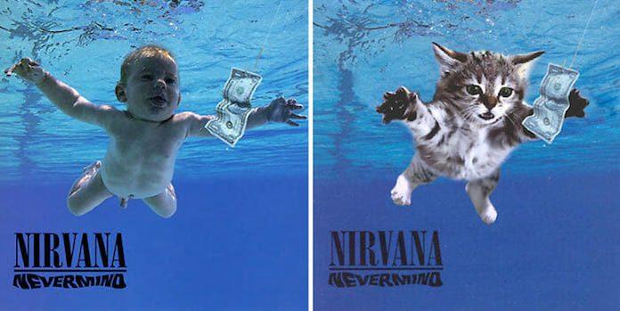 gatos nevermind nirvana capa
