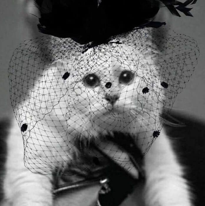 Gata de Karl Lagerfeld