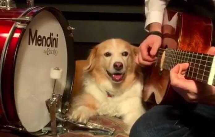 Cachorro toca Arctic Monkeys
