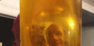 Flea com pote de mel