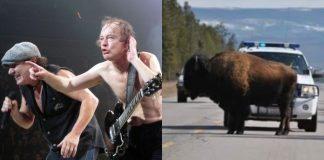 AC/DC e bisão