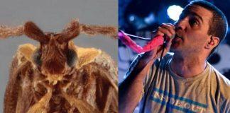 Besouro e Rodrigo Lima, do Dead Fish