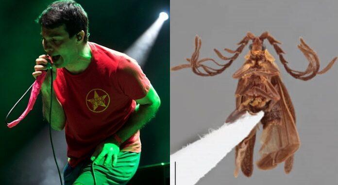 Rodrigo (Dead Fish) e besouro