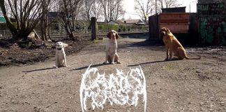 Black Metal Canis Morsum Cachorros