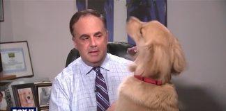Cachorro interrompe previsão do tempo