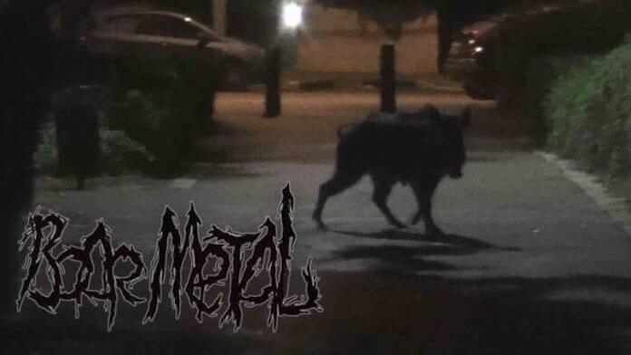 Metal com javalis selvagens