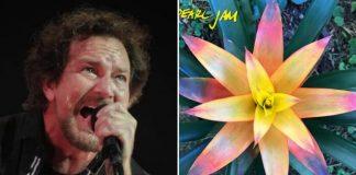 Pearl Jam - Get It Back