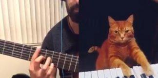 Gato pianista e músico