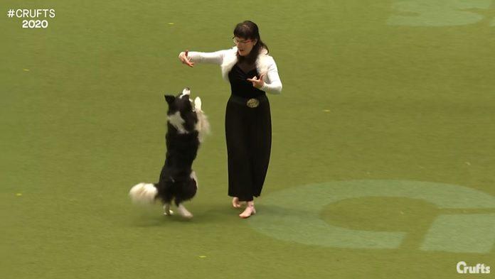Cachorro dançando Evanescence socorro