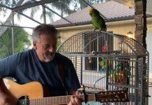 Papagaio Roqueiro