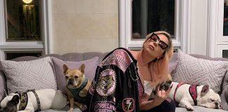 Lady Gaga e seus cachorros