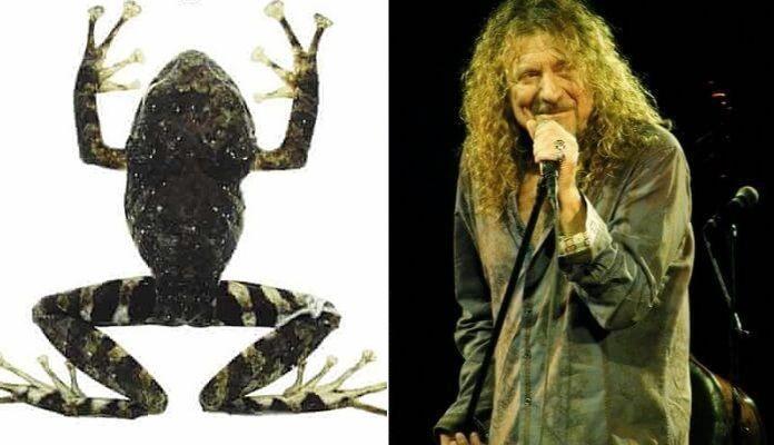Led Zeppelin dá nome a espécie de sapo